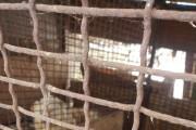 [펫이슈] 강아지머리·토끼시체 먹이로 준다니...역대급 동물학대 충격